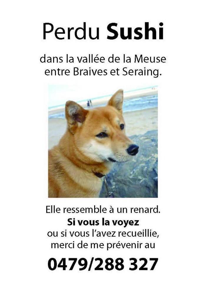 Perdu SUSHI chienne japonaise perdue entre Brauves et Seraing (vallée de la Meuse)