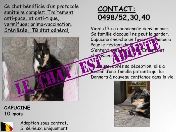 Capusine chatons de 10 mois en adoption