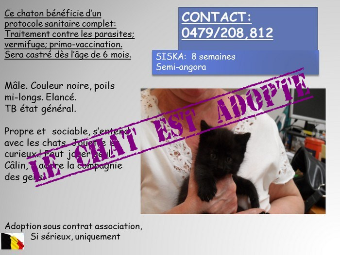 SISKA chaton 8 semaines à adopter