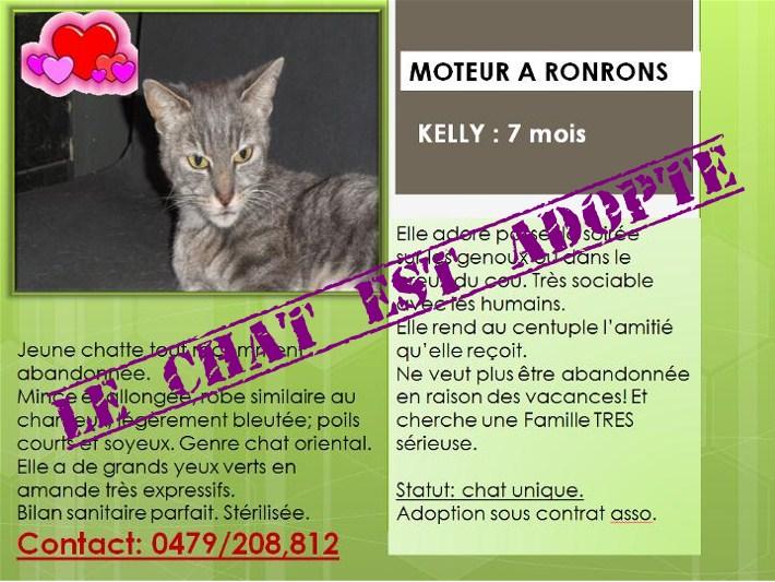 Kelly véritable moteur a Ronrons de 7 mois en adoptions
