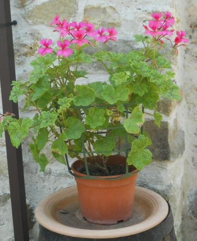 http://data0.eklablog.com/aufildelaisne/perso/fleurs/gera.jpg