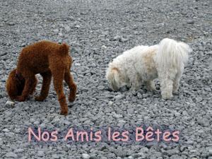 Ardèche la belle Album-01