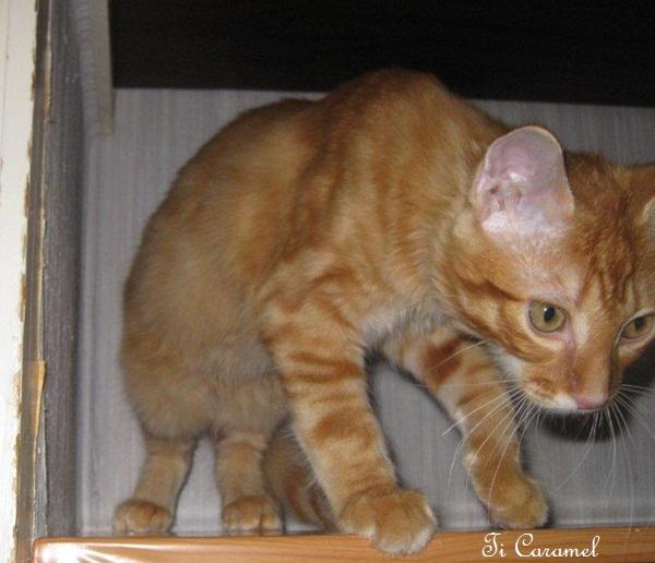 Caramel sur l'étagère