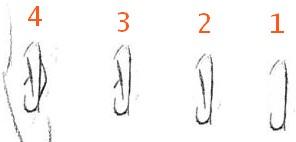 comment dessiner une oreille de profil
