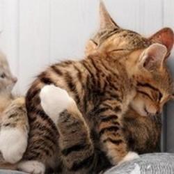 kim et ses bébés