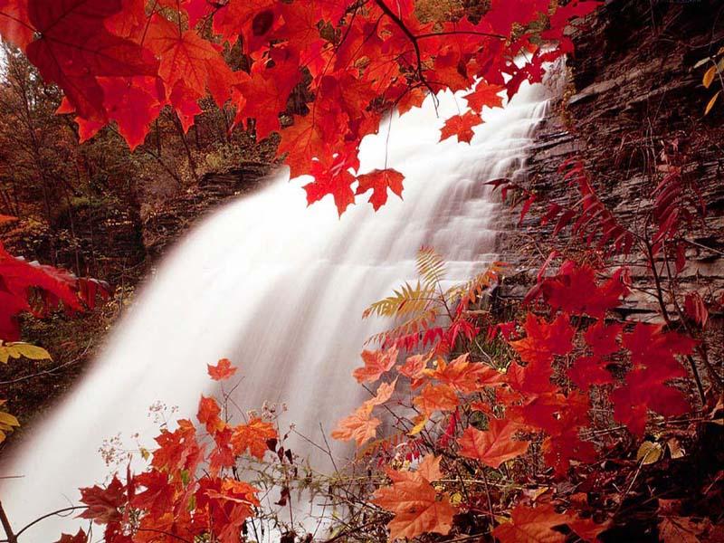 Vive l 39 automne et ses belles couleurs - L automne et ses couleurs ...
