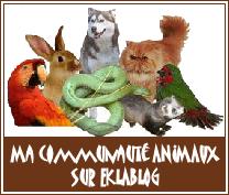 Communauté-animaux