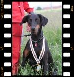 Médaille d'or Yverdon Vuiteboeuf - championnat du monde chiens de piste