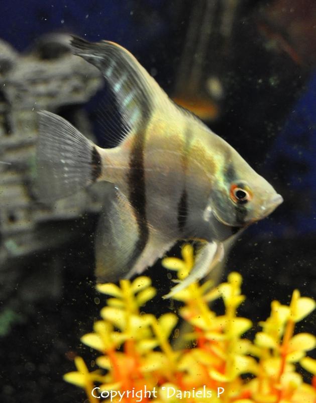 heureux comme un poisson dans l'eau en direct de mon aquarium + la vérité