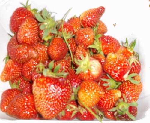 thermomix-Glace aux fraises
