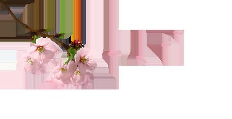 tubes fleurs