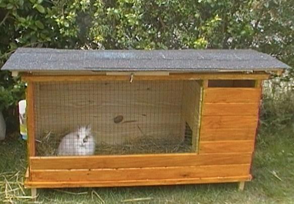 Le terrier des lapins afficher le sujet vos for Abreuvoir lapin fait maison
