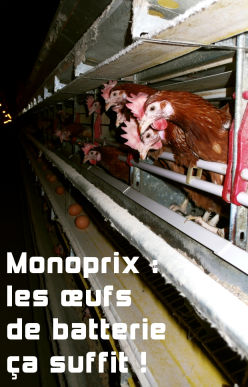 Monoprix : les &oelig;ufs de batterie &ccedil;a suffit !