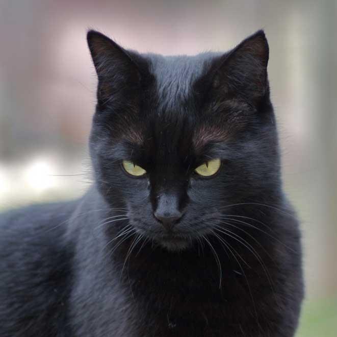 , Le blog pour les amoureux des chats!!!