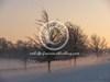 prairie en hiver