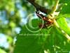 insectes en train de se reproduire