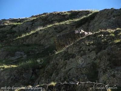 rochers surmontés d'herbe