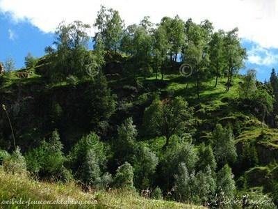 colline avec des arbres