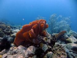 Découverte du monde sous marin