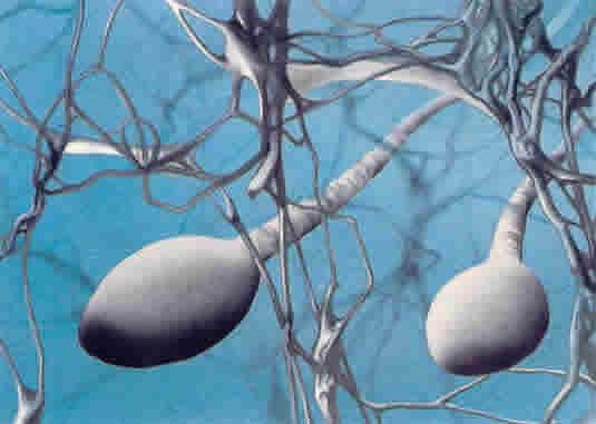 Tests sur les animaux : bientôt pratiqués sur des spermatozoïdes de laboratoire ?