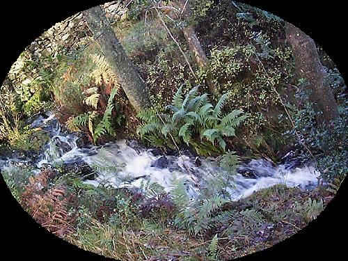 Les Lacs et Forêts